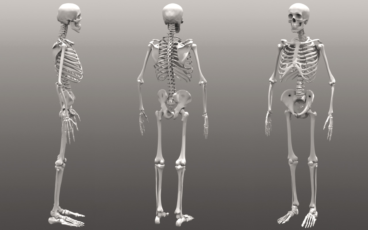 Index of ModoForumSkeleton  Skeleton